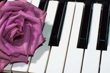 purple rose: Secret purple rose on piano keys