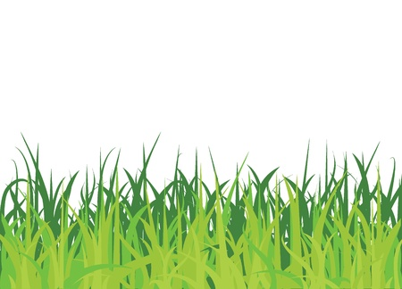 greenery: grass background for background, nature, and others
