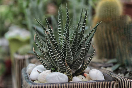 green agave cactus photo