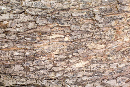 Old Wood Tree Texture Background Pattern photo