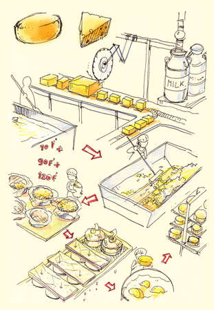 cheddar cheese: Cheese factory illustration Illustration show how the yellow yummy cheeses are made in the factory through all the steps