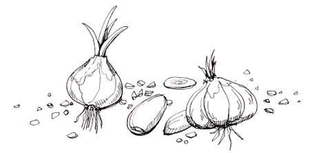 stead: Garlic illustration drawing Hand drawn of garlic in different shape and stead