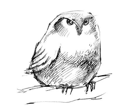 hand sketch an owl drawing photo