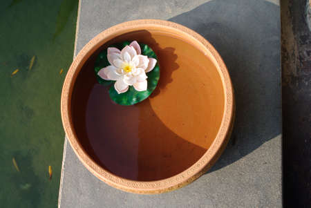 lotus floating in water clay pot at spa. with fish background photo