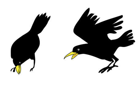cartoon crow vector Vector