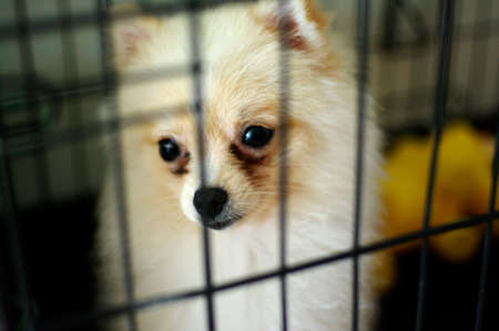 dog in cage shelter photo