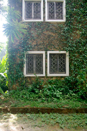 brick wall with climbing tree, plant wall and white window photo