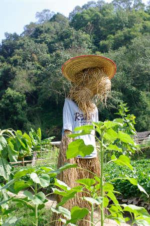oz: scarecrow, straw man at the sun set farm