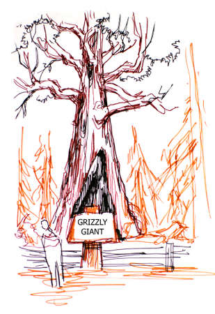 sierra nevada: grizzly giant tree illustration in Sequoia park, California Stock Photo