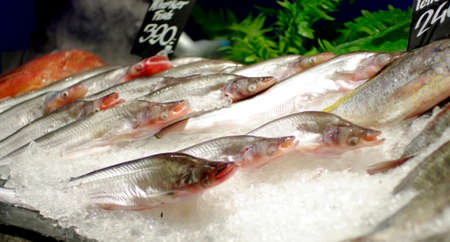 fish ice in supermarket photo