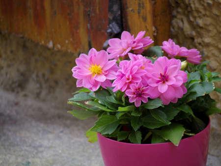 pink flower pot  beside brick wall photo