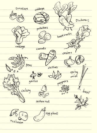 vegetable hand doodle illustration , cabbages, tomatoes, potatoes, chillies, basil, mushroom, celary illustration