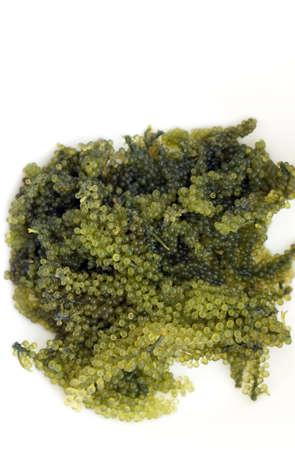 uni: Sea grape seaweed, uni budou. japanese ocean seaweed food. great food for vegan and vegetarian
