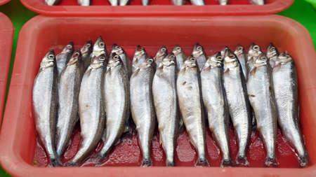 lanceolatus: shishamo, capelin fish, fish with lot of eggs in belly. Raw at fish market