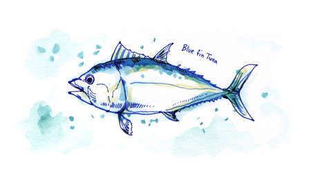 fin: blue fin tuna watercolour painting illustration