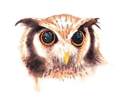 beautiful eyes: Watercolor painting of Wild brown owl with beautiful big eyes