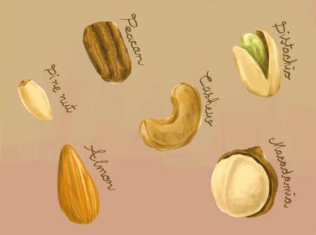 macadamia: Digital painting of healthy nuts macadamia, peacan, cashew, pine nut, almond and pistachio illustration