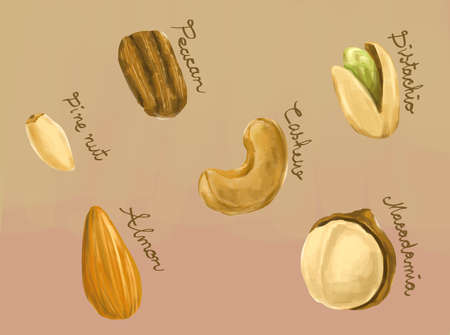 Digital painting of healthy nuts macadamia, peacan, cashew, pine nut, almond and pistachio illustration