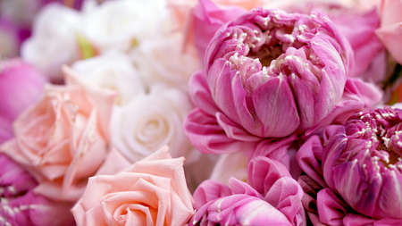 Pink roses and lotuses flower bouquet valentine day background Stock Photo