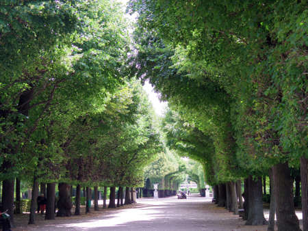 schonbrunn palace: Vienna, Austria - July 2015: Schonbrunn Palace beautiful green garden area