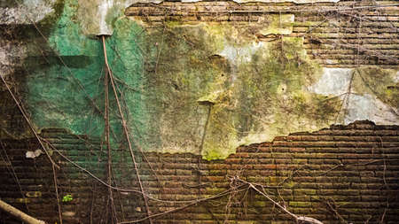 humid: Cracked old brick and concrete wall covered with moss and tree trunk. high humidity abandon texture background Stock Photo
