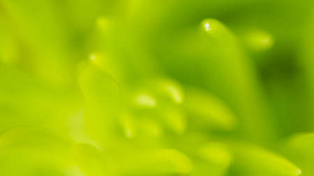 Green plant macro soft focus, abstract nature background with copy space Stock Photo