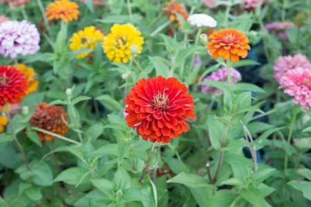 color full flowers.