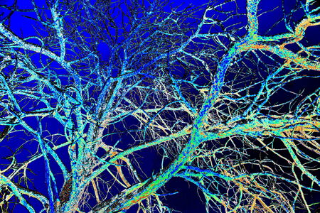 Blue enhanced tree