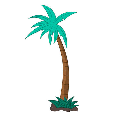 Palm tree isolated illustration on white background in cartoon style. Design element