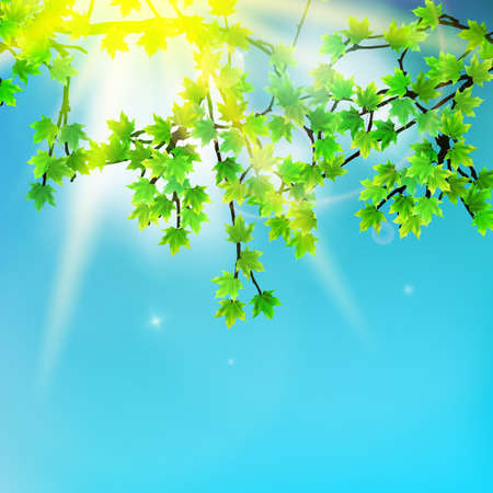 sunshine background: Beauty green leaves branches on sunshine background. EPS10