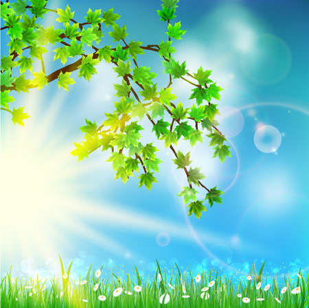 Summer green background with selective focus. EPS10 Vector