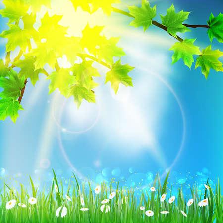 fondo natural: Natural de fondo de cielo y la hierba. EPS10 Vectores