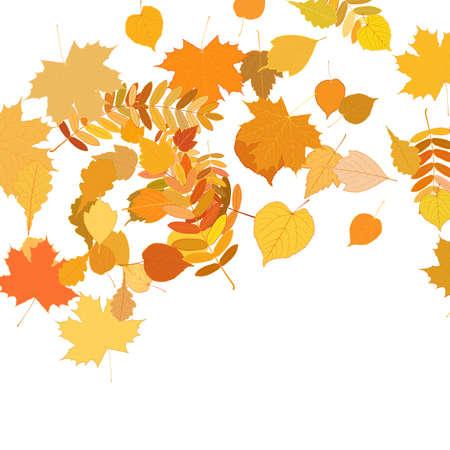 hojas de oto�o cayendo: Hojas de oto�o cayendo y girando en blanco.