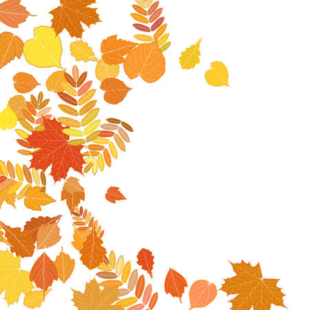 withering: Autumn leaves falling and spinning on white.
