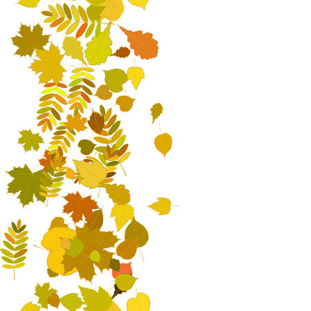Autumn background with colorful leaves   Vector