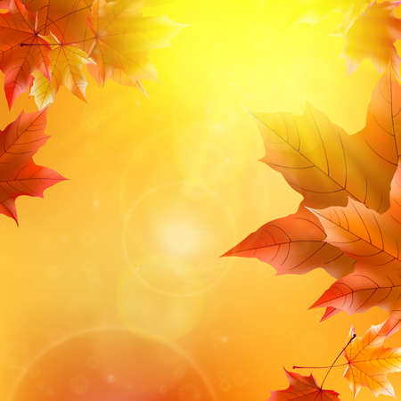 Delicate autumn sun with glare on gold sky Imagens - 29973464