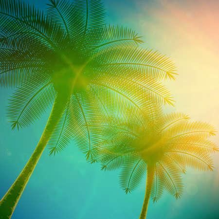 Palmy z pięknym zachodem słońca.