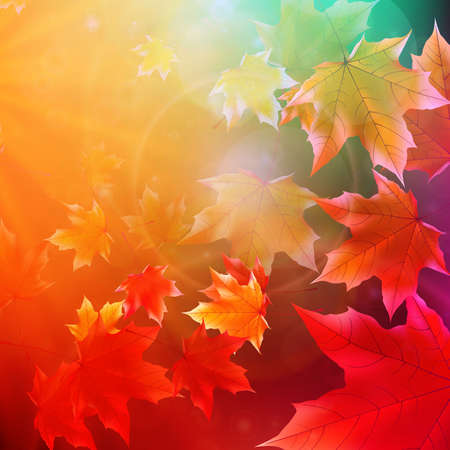 golden dusk: Beautiful autumn Leaves with delicate sunset light  EPS10