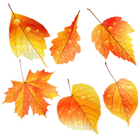 Set of colorful autumn leaves  EPS10 Vector
