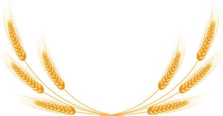 熟した耳小麦セット分離詳細テンプレート EPS10  イラスト・ベクター素材