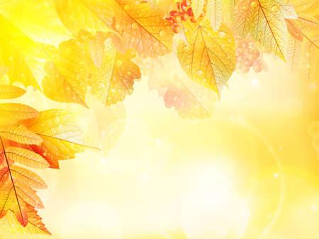 Bright warm sun light, orange dry leaves, autumn season Imagens - 30879013