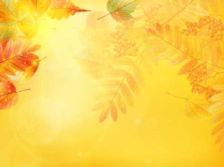 Bright warm sun light, orange dry leaves, autumn season Imagens - 30879015