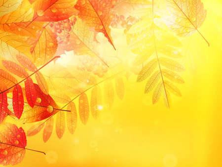 Bright warm sun light, orange dry leaves, autumn season  EPS10