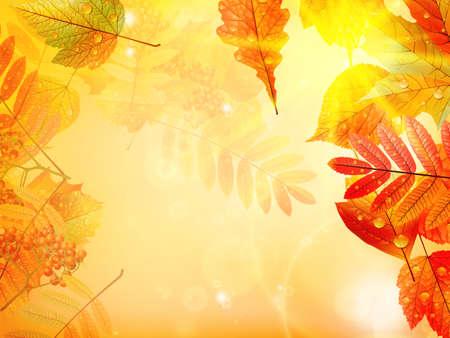 Bright warm sun light, orange dry leaves, autumn season