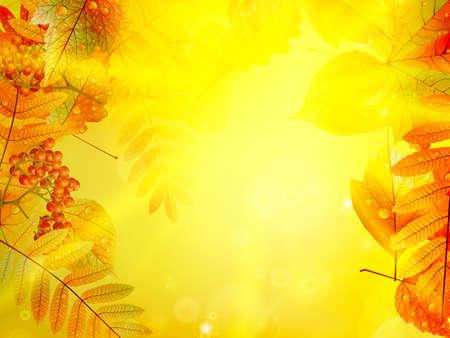 Bright warm sun light, orange dry leaves, autumn season Imagens - 30878996