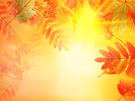Bright warm sun light, orange dry leaves, autumn season.  Ilustração