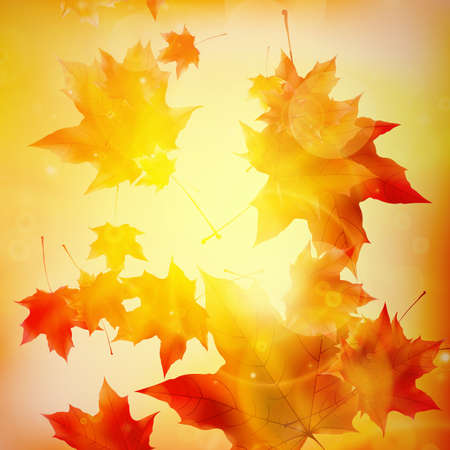 Delicate autumn sun with glare on gold sky Imagens - 30878265