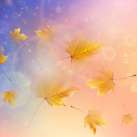 Beautiful autumn Leaves with delicate sunset light
