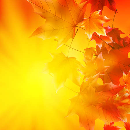 Delicate autumn sun with glare on gold sky.