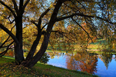 mirror on the water: autumn tree on the river bank with reflection in mirror water Stock Photo